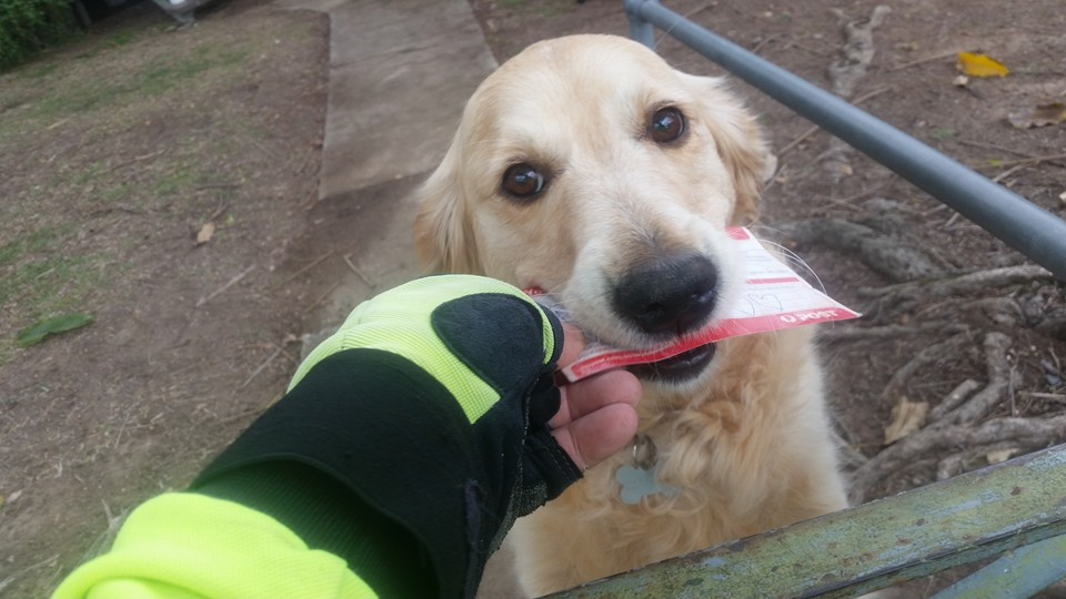 A postman gives this adorable dog her own post