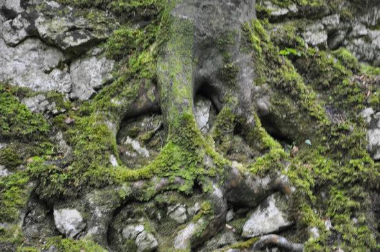 dooney-rock-forest-park