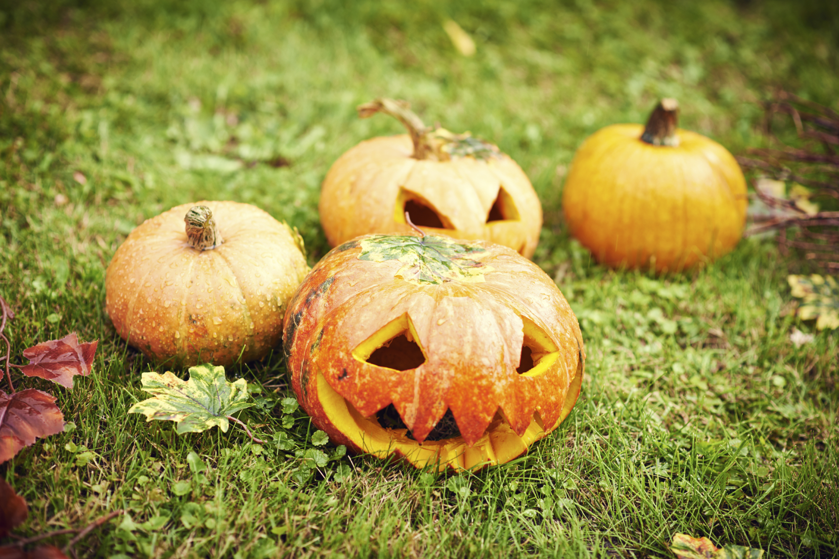halloween trend