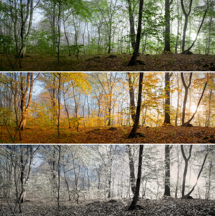 Beautiful morning scene in the forest, wood panorama