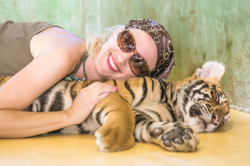 Smiling beautiful woman with sunglasses, embraces a little tiger, Panthera Tigris, lying in Thailand. Concepts of courage, fun and dangerous.