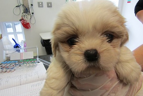 These Insanely Cute Puppies Need Homes After Being Rescued From A
