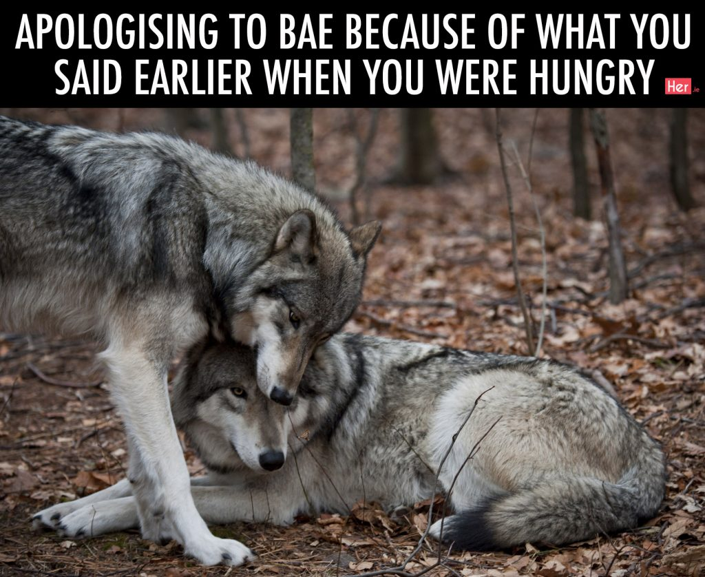 Two grey wolves showing affection