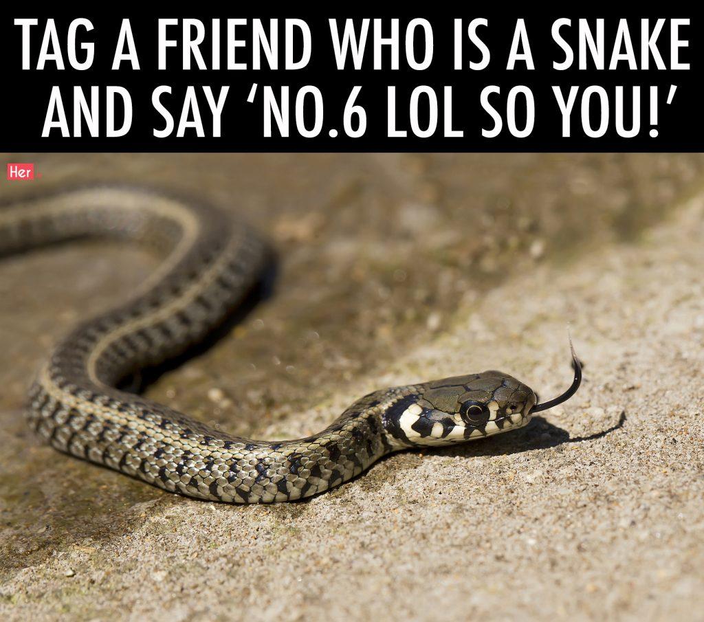 Grass snake (Natrix natrix), ringed snake or water snake, is a Eurasian non-venomous snake.