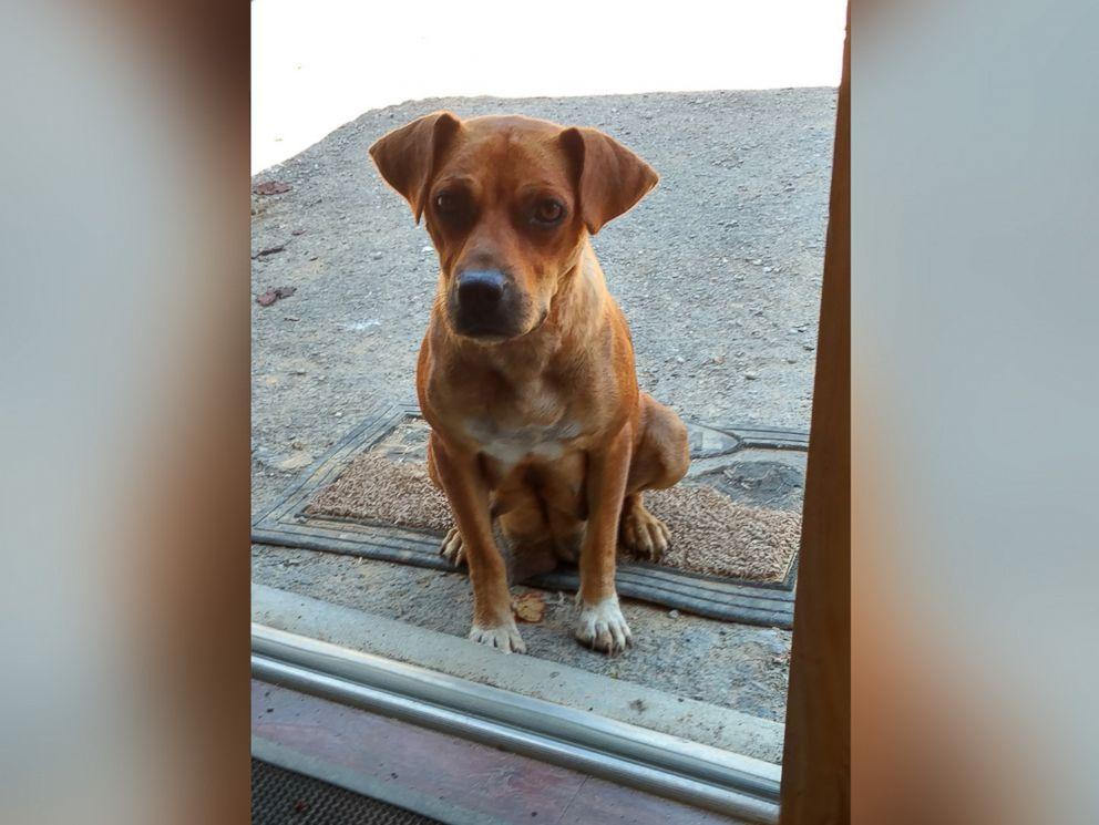 ht-bachelor-puppy01--floater-jrl-161026_4x3_992