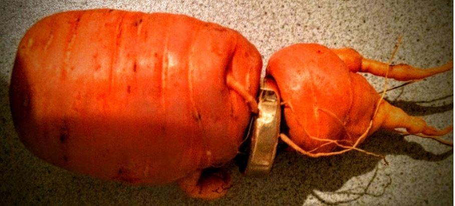 Carrot Grew Inside Of Ring