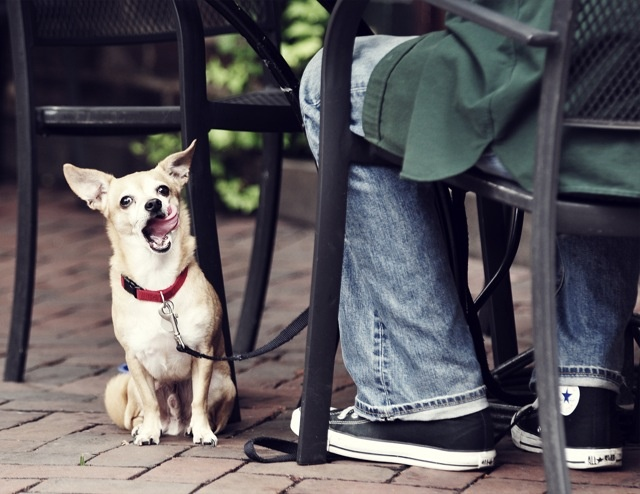 Hurrah! You can now bring your pets to restaurants with you