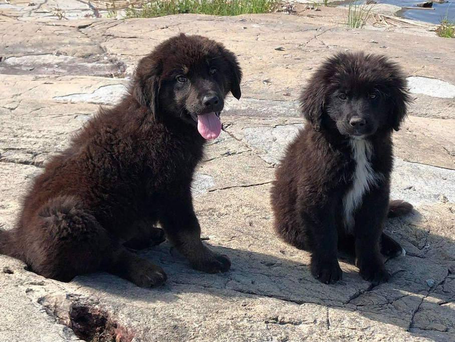 Abandoned puppies rescued from uninhabited Canadian island