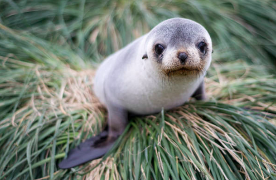 21 Pictures Of Baby Seals That Will Make You Forget All About The