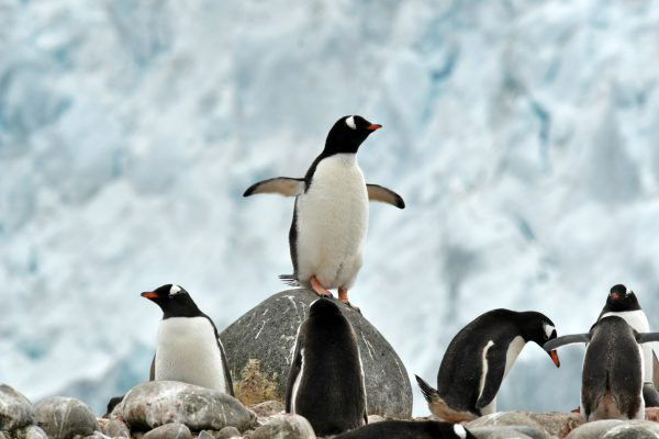 8 things to know about penguins on World Penguin Day | Her.ie