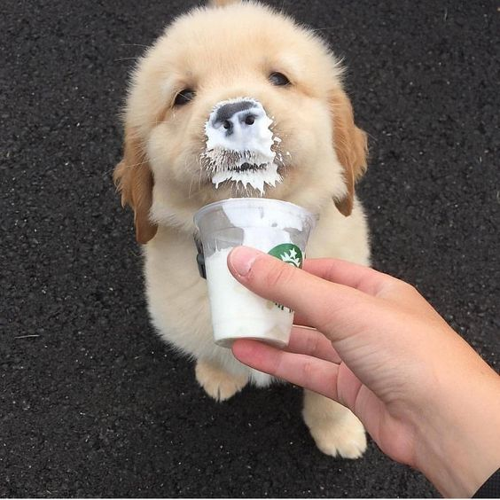 This is how you can get a puppuccino for your dog at any Starbucks cafe |  Her.ie